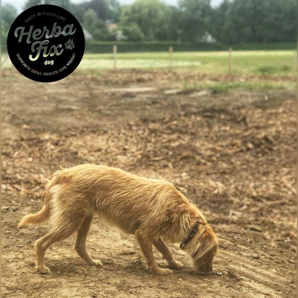 Snuffelweide herbafix rescue dog