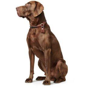 Training halsband round & soft cody hond