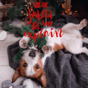 kerstkaart hond herbafix